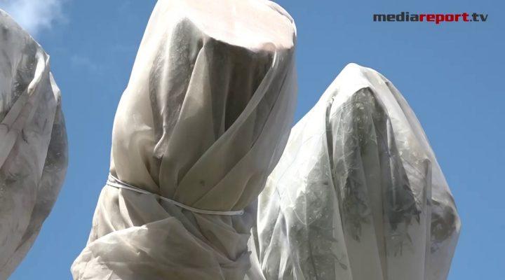 """Xylella in Puglia, Nardone: """"La provincia di Bari è indenne dal batterio"""""""