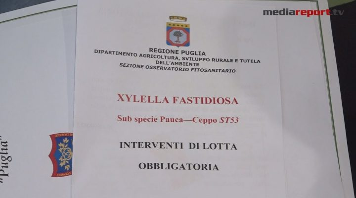 """Xylella: arare è """"obbligatorio"""" per impedire la diffusione del batterio"""