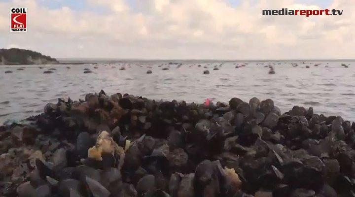 Taranto, mitilicoltura a rischio: la Regione Puglia interviene a sostegno dei pescatori