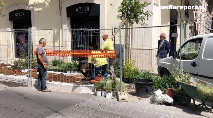 Bari: rispuntano gli alberi in via Sparano
