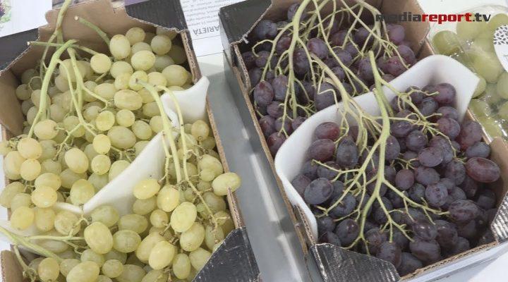 Agricoltura: Puglia regina delle nuove varietà di uva da tavola